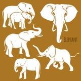 Комплект африканских слонов в различных представлениях Стоковая Фотография RF