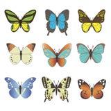 Комплект бабочек вектора Стоковые Фотографии RF