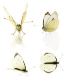 Комплект бабочки капусты на белой предпосылке Стоковое фото RF