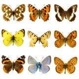 Комплект бабочки Стоковое Изображение