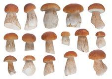Комплект 16 белых грибов Стоковое фото RF
