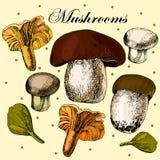 Комплект вектора грибов нарисованных рукой съестных Иллюстрация штока