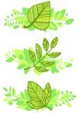 Комплект вектора декоративного зеленого цвета листает составы Стоковая Фотография