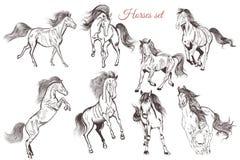 Комплект вектора детальной лошадей нарисованных рукой для дизайна иллюстрация вектора