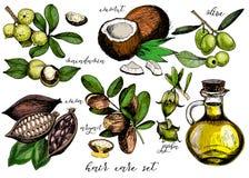 Комплект вектора ингридиентов ухода за волосами Бутылка оливки, argan, кокоса, какао, макадамии, жожобы и масла Стоковые Фото