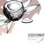 Комплект вектора ингридиентов ухода за волосами Органической элементы нарисованные рукой Кокос и листья Стоковое Изображение