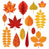 Комплект вектора листьев осени Стоковая Фотография