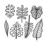 Комплект вектора листьев тропических заводов Иллюстрация вектора