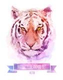 Комплект вектора иллюстраций акварели милый тигр иллюстрация штока