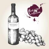 Комплект вектора красного вина в винтажном стиле Бутылка, стекло и виноградина Польза для ресторана, кафа, магазина, еды, меню, д Стоковое фото RF