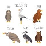 Комплект вектора красочных значков хищных птиц Сыч, хищник, орел иллюстрация штока