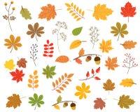 Комплект вектора красочных листьев осени Иллюстрация штока