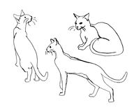 Комплект вектора милых котов Doodle или изображение стиля эскиза Стоковые Фотографии RF