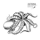 Комплект вектора нарисованный рукой значков морепродуктов Изолированный осьминог Стоковые Фотографии RF