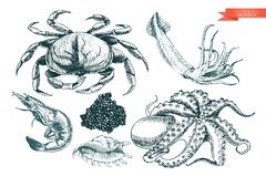 Комплект вектора нарисованный рукой значков морепродуктов Краб, креветка, кальмар, осьминог, икра и устрица Выгравированное искус иллюстрация вектора
