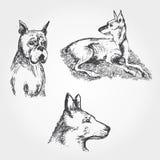 Комплект вектора нарисованный рукой собак иллюстрация штока