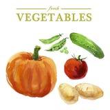Комплект вектора овощей акварели свежих на белой предпосылке Стоковые Фото