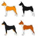 Комплект вектора породы basenji собак, всех цветов Стоковые Изображения