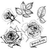 Комплект вектора роз Искусство нарисованное рукой винтажное Флористический развивает Стоковые Изображения