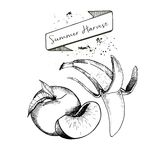 Комплект вектора сбора лета украшенный с знаменем и помарками Персик и банан Стоковое Фото
