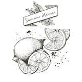 Комплект вектора сбора лета украшенный с знаменем, папоротником выходит и закрывает Лимон, куски известки oan оранжевые Стоковое фото RF