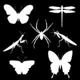 Комплект вектора силуэтов насекомых - бабочек, паука Стоковые Изображения