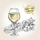 Комплект вектора собрания белого вина Выгравированный винтажный стиль Стекло и виноградина султанши Изолированный на предпосылке  Стоковое фото RF