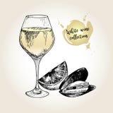 Комплект вектора собрания белого вина Выгравированный винтажный стиль Стекло, мидия и известка Изолированный на предпосылке grung Стоковые Изображения RF