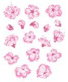 Комплект вектора цветков весны Стоковая Фотография RF