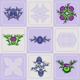 Комплект вектора thistle цветет и кельтские узлы Стоковая Фотография