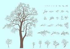 Комплект ветвей и дерево сформировали от этих ветвей Стоковое Изображение