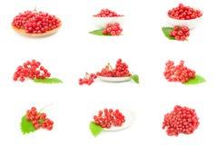 Комплект ветви красных ягод калины Стоковая Фотография RF