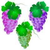 Комплект виноградины. Вектор Стоковое Изображение