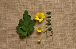 Комплект всего и уменьшанного вдвое стоцвета с листьями Пути клиппирования стоковые изображения