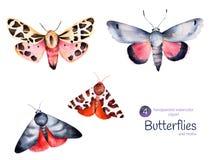 Комплект высококачественной руки покрасил бабочек и сумеречниц акварели иллюстрация вектора