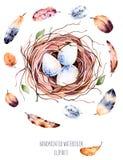 Комплект высококачественной руки покрасил гнездо птицы акварели с яичками и пер иллюстрация штока