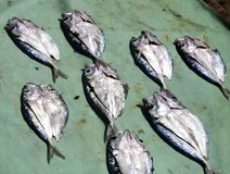 Комплект высушенных рыб Стоковые Фотографии RF