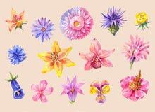 Комплект головы цветков в акварели Изолированная картина нарисованная рукой, Стоковое Фото