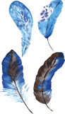 Комплект голубых пер акварели Стоковое фото RF