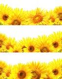 Комплект границ с солнцецветами Стоковые Фотографии RF