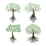 Комплект деревьев и корней Стоковое фото RF