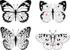 Комплект естественных черно-белых бабочек вектора Стоковое Фото