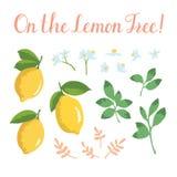 Комплект лета вектора при лимоны и цветки изолированные на предпосылке Стоковые Изображения