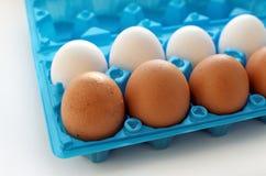 Комплект желтых и белых яичек - взгляда со стороны Стоковое Изображение