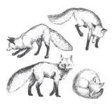 Комплект животного вектора нарисованный рукой милый Иллюстрация эскиза Стоковые Изображения