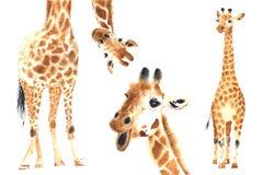 Комплект жирафов акварели Стоковые Изображения RF