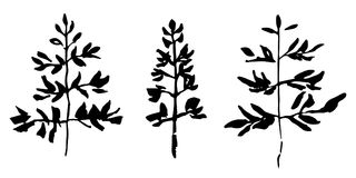 Комплект завода нарисованного рукой Иллюстрация вектора стиля эскиза Листья как элемент дизайна Стоковое фото RF
