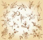 Комплект заводов и деревьев нарисованных рукой Стоковые Фото