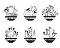 Комплект зацветая кактуса стоковое изображение rf