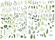 Комплект зеленого цвета акварели Стоковые Изображения RF